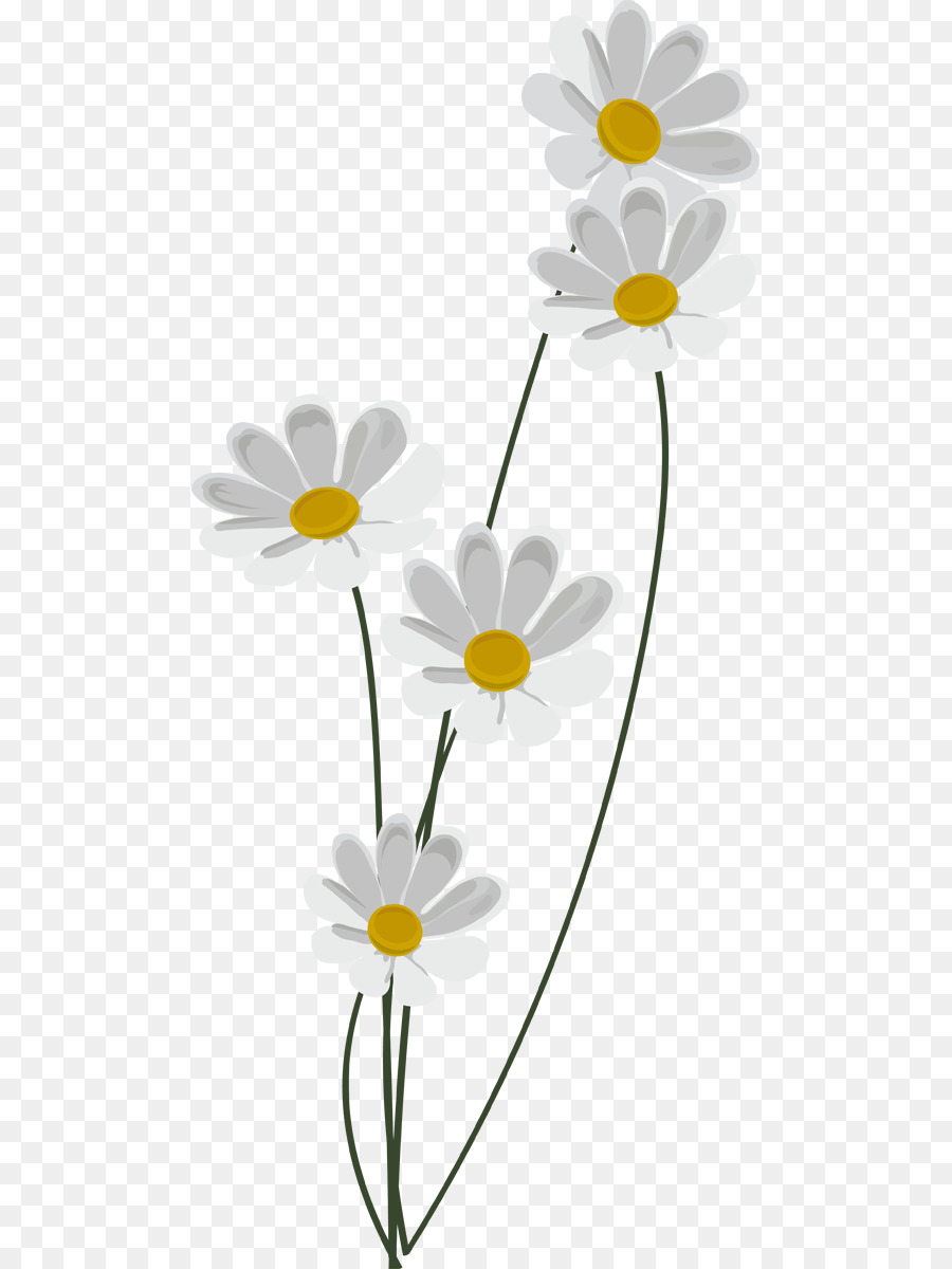 Daisies clipart chamomile flower. Floral background yellow plant