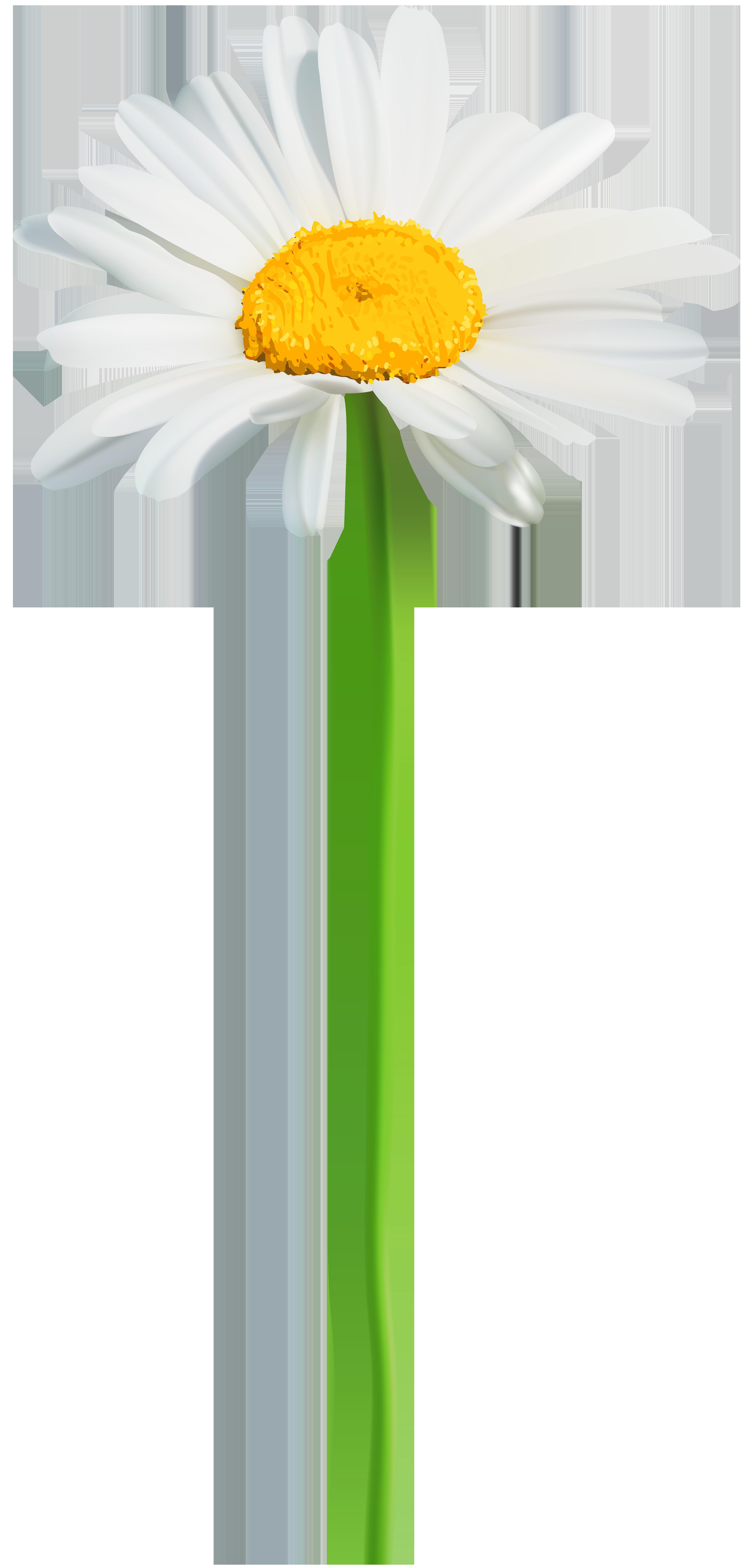 Png clip art image. Daisy clipart small daisy