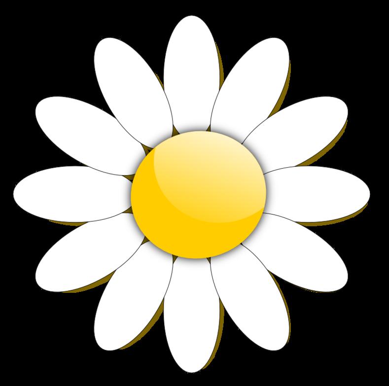 Daisy clipart flower head, Daisy flower head Transparent ...