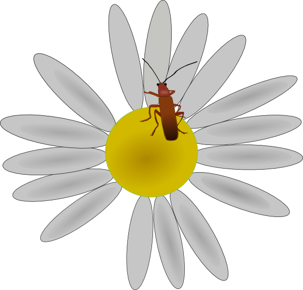 Bug frames illustrations hd. Daisies clipart color