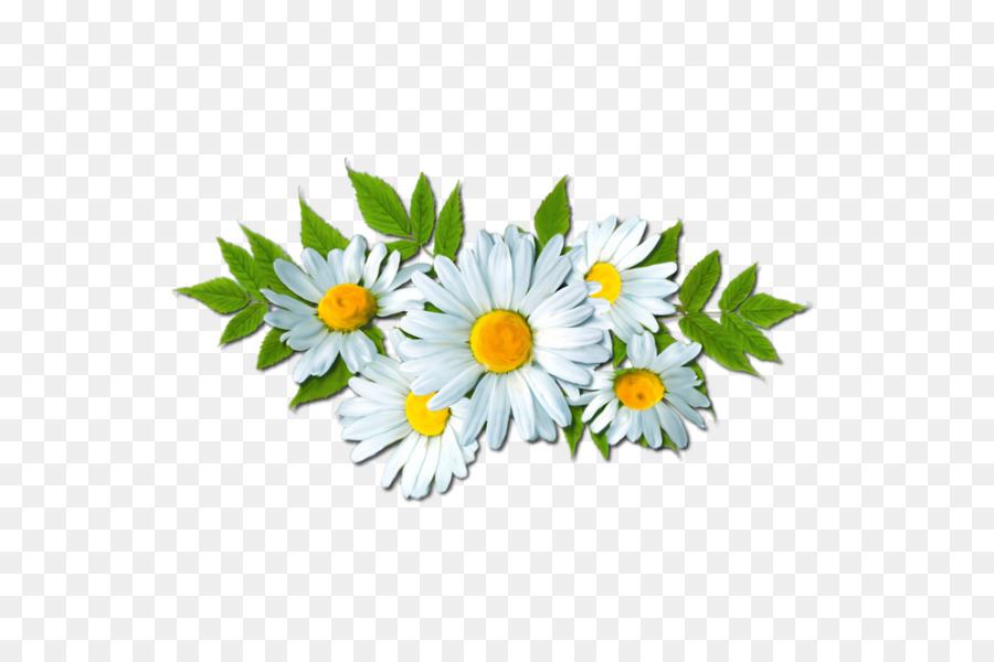Daisy clipart dais. Floral flower background