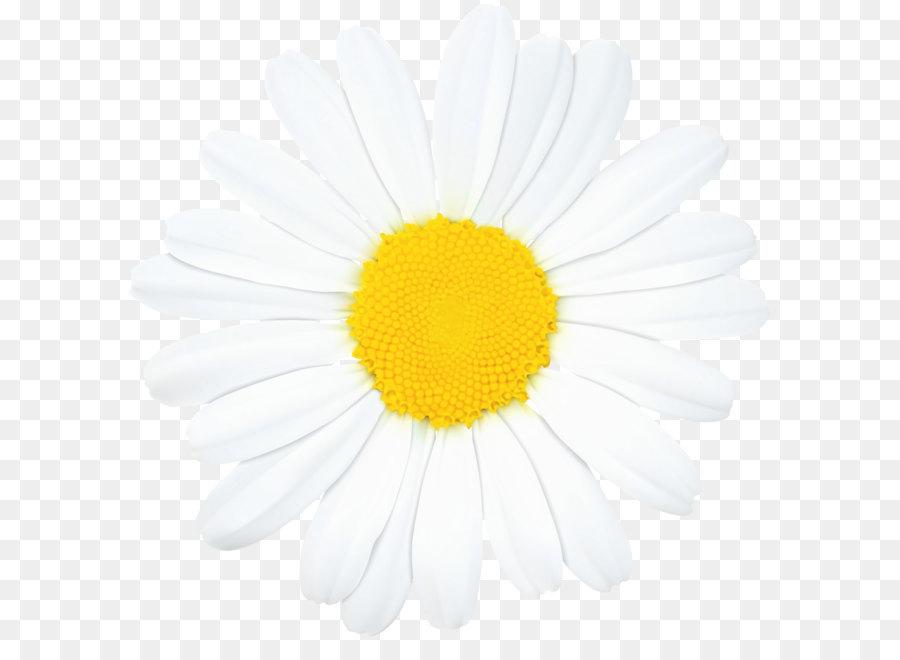 Cartoon sunflower png download. Daisy clipart dais