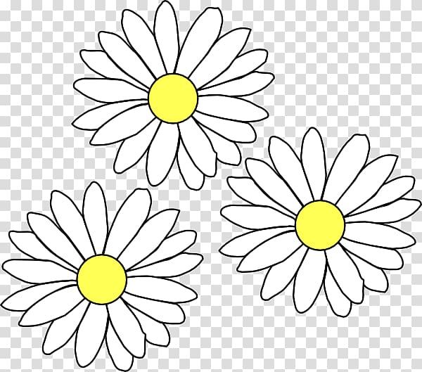 Common daisy transparent background. Daisies clipart daisey