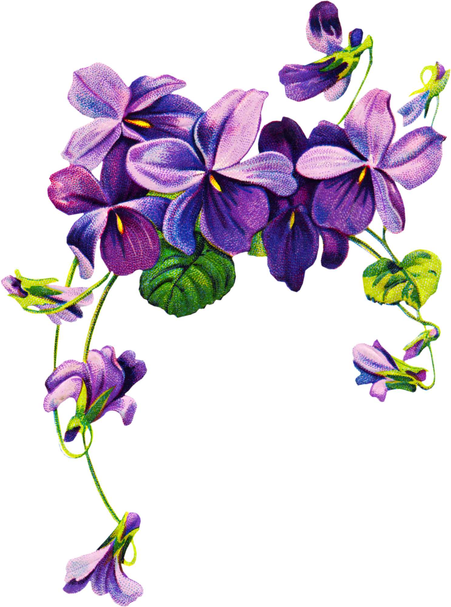 Drawing at getdrawings com. Vines clipart purple flower
