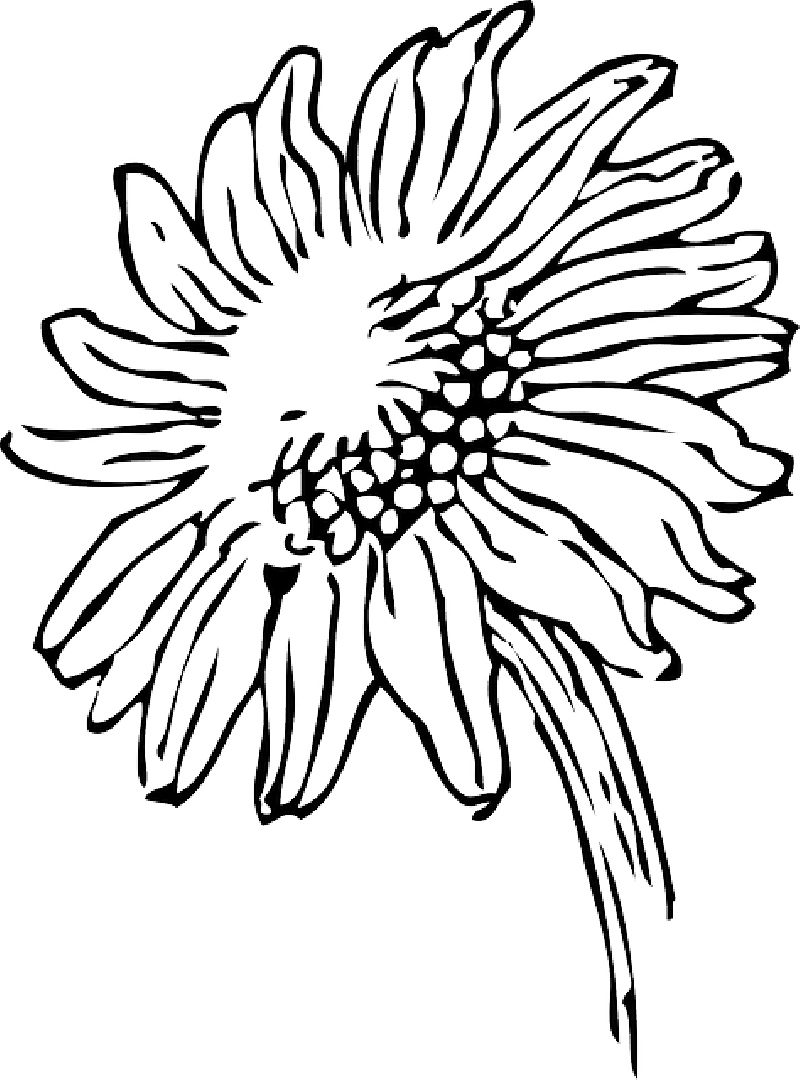 Drawing at getdrawings com. Outline clipart daisy