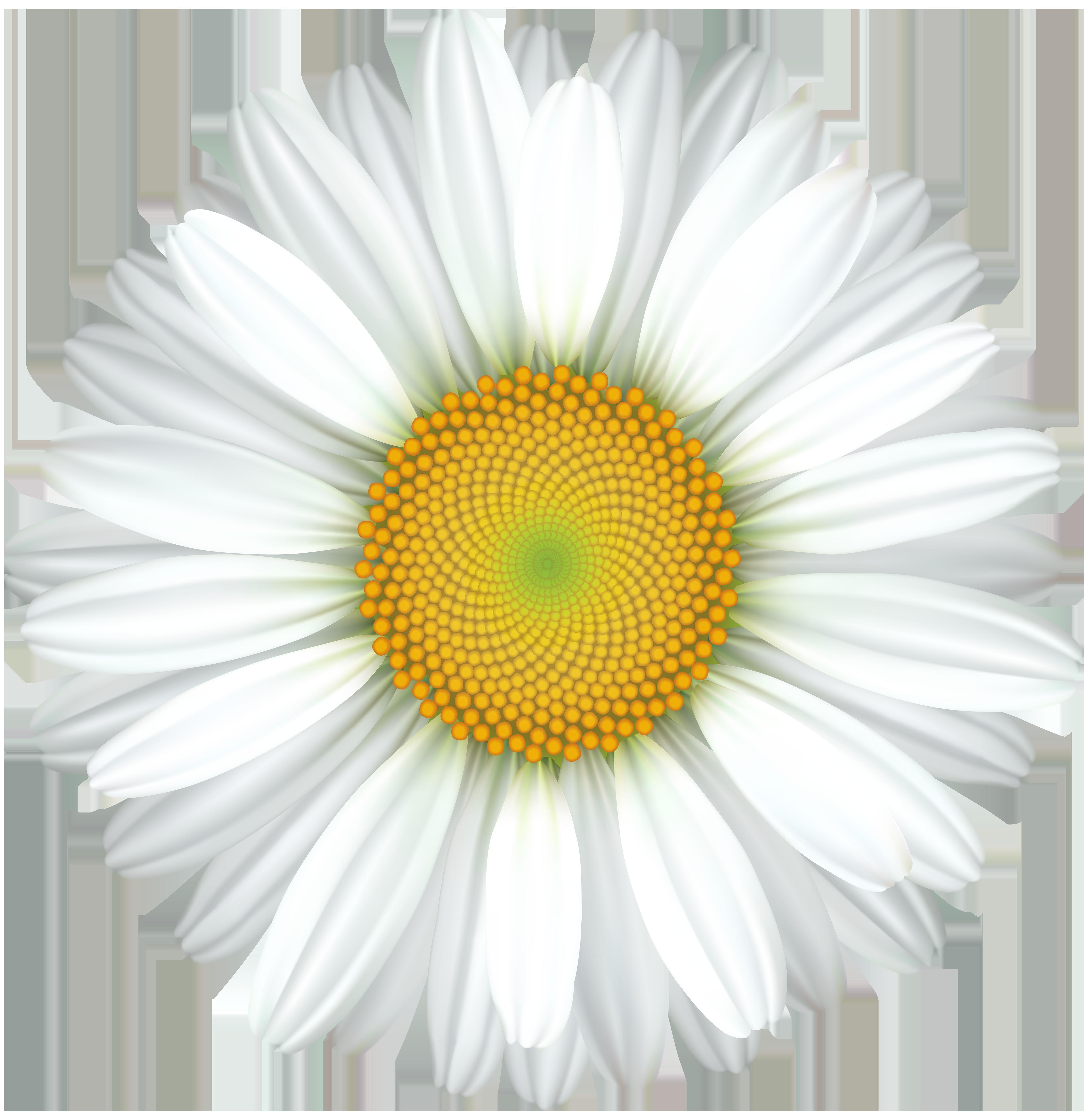 Daisy clipart wheat grass. Flower transparent clip art