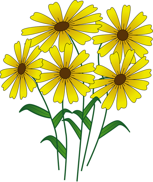 Frames illustrations hd images. Daisies clipart five flower