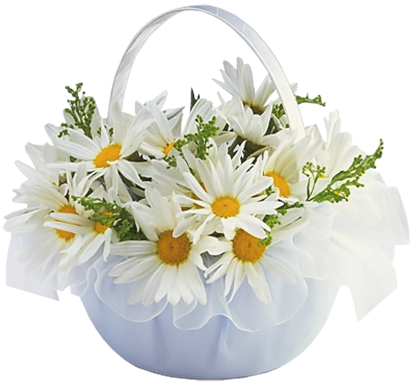 Daisies clipart flower basket. With transparent
