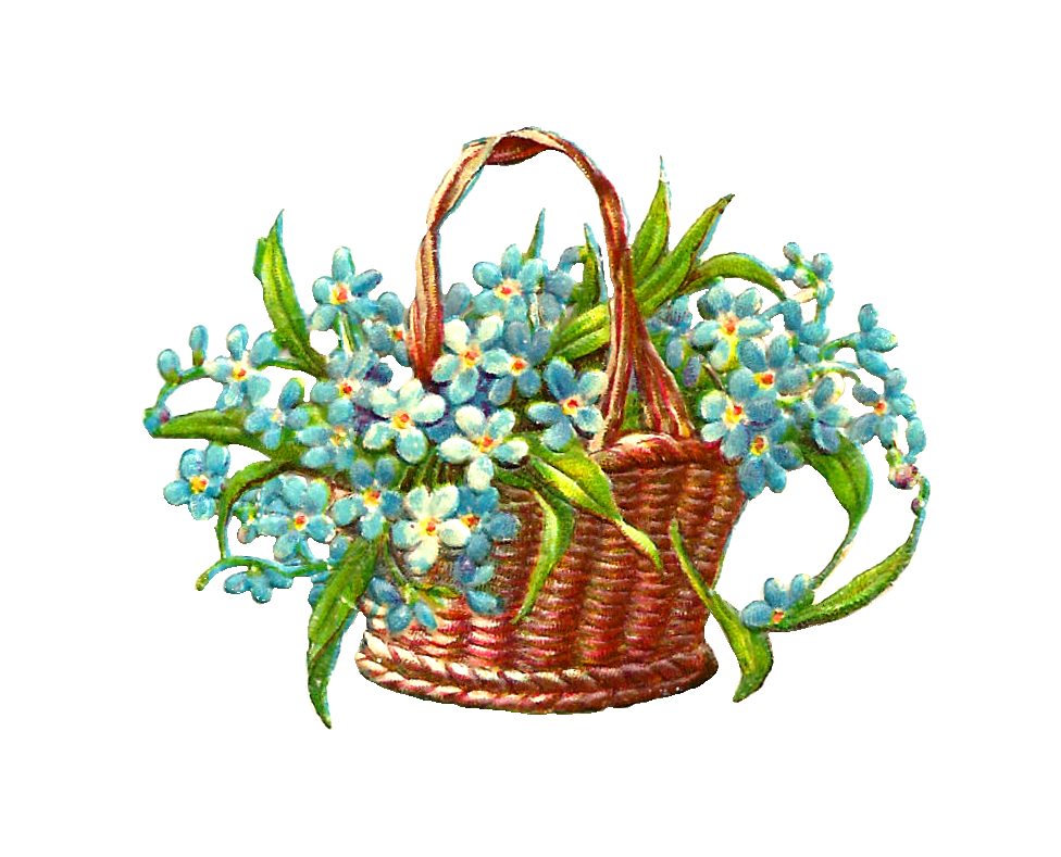 Holly clipart hampers. Forget me not flower