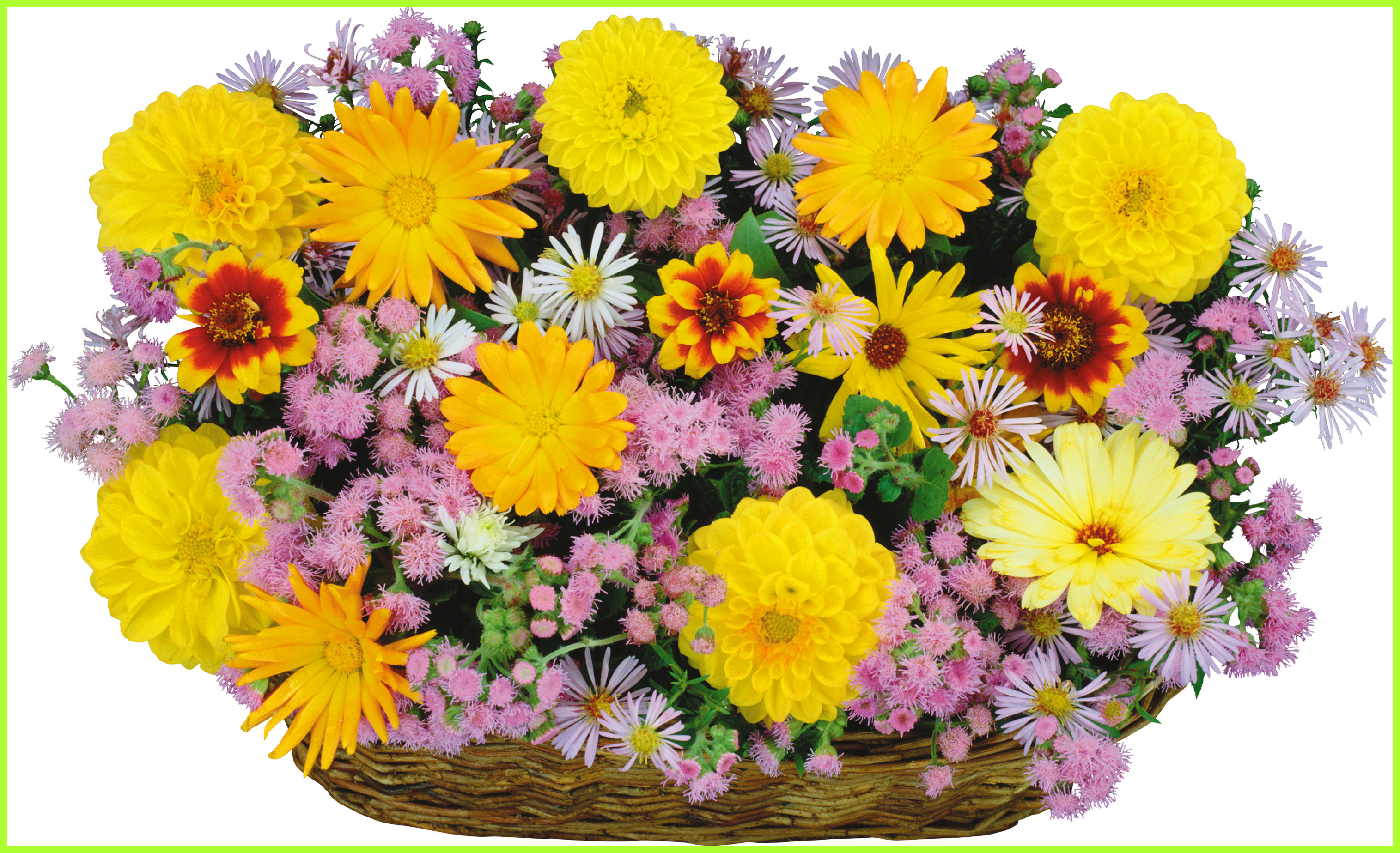 Shocking clip art watercolor. Daisies clipart flower basket