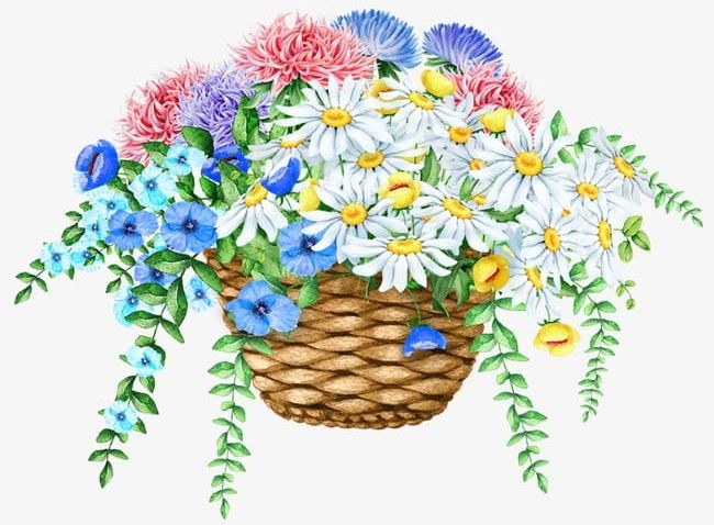 Exquisite beautiful of flowers. Daisies clipart flower basket