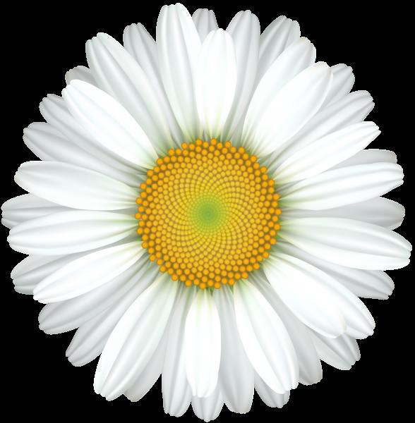 Transparent clip art image. Daisy clipart flower day