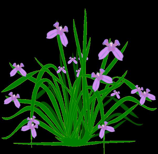 Seedling clipart plantae. Lavender free download best