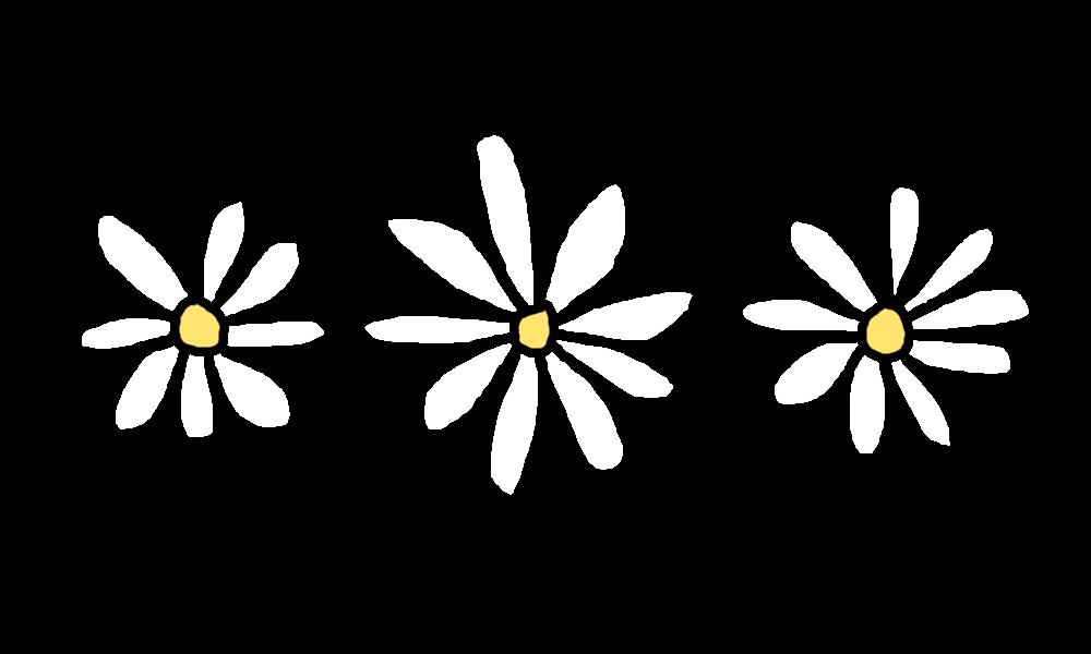 Daisy transparent tumblr