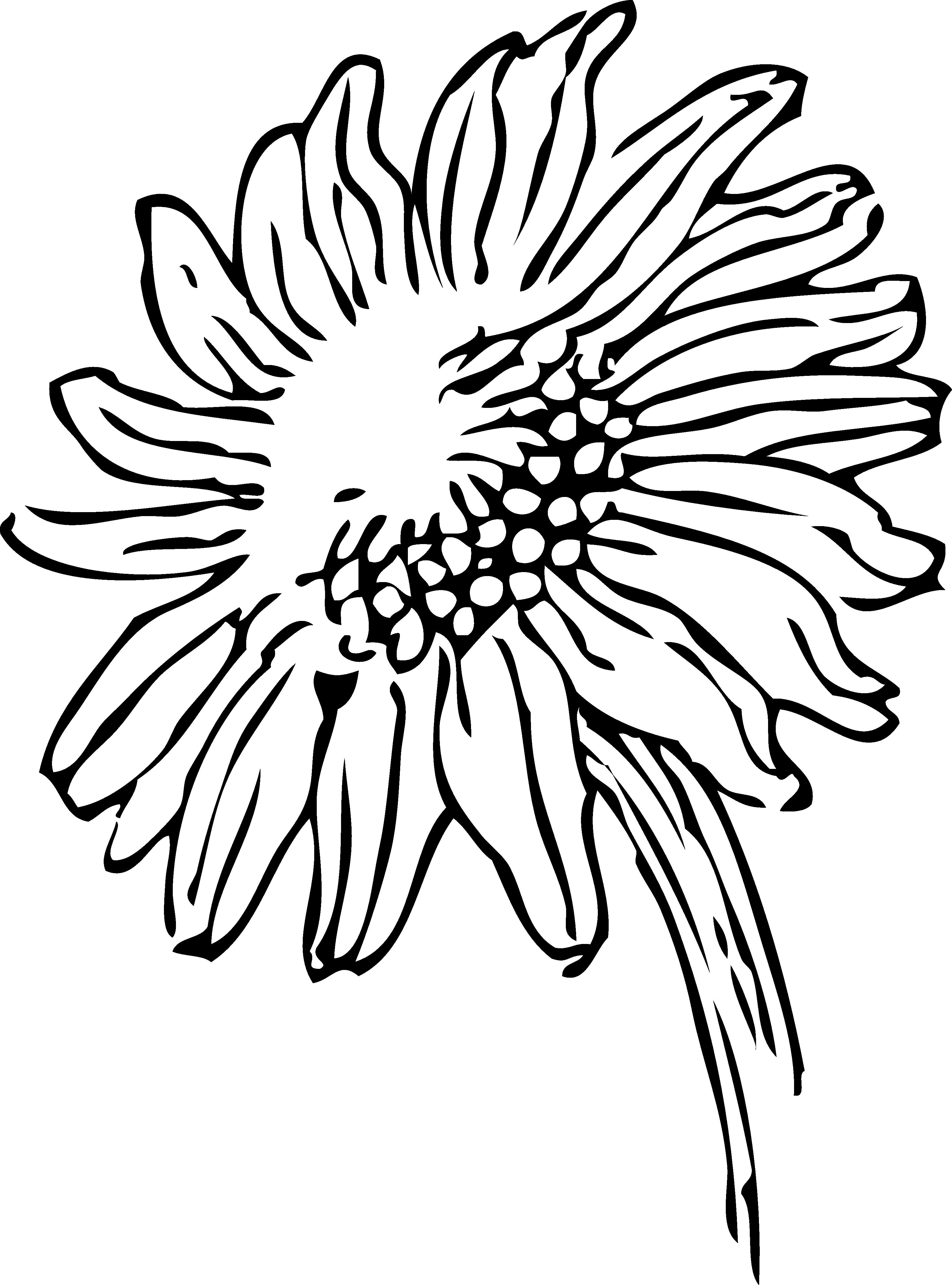 Daisies clipart flowerblack. White flower free on