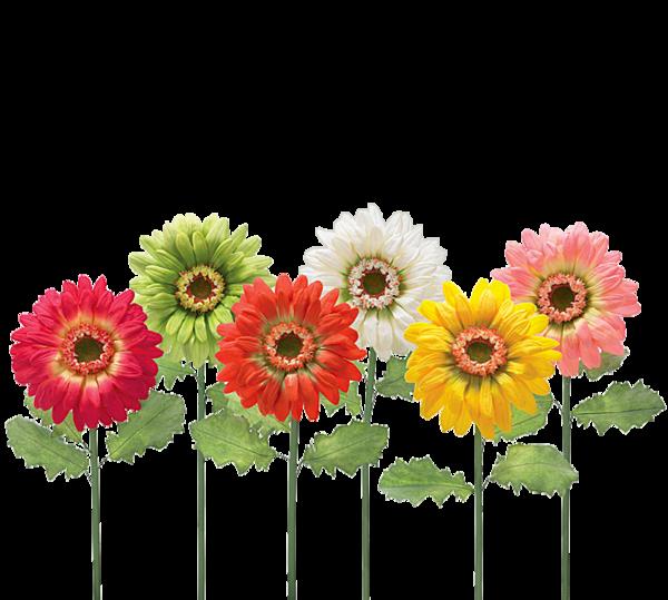 Daisies clipart flowering bush. Fleurs flores flowers bloemen