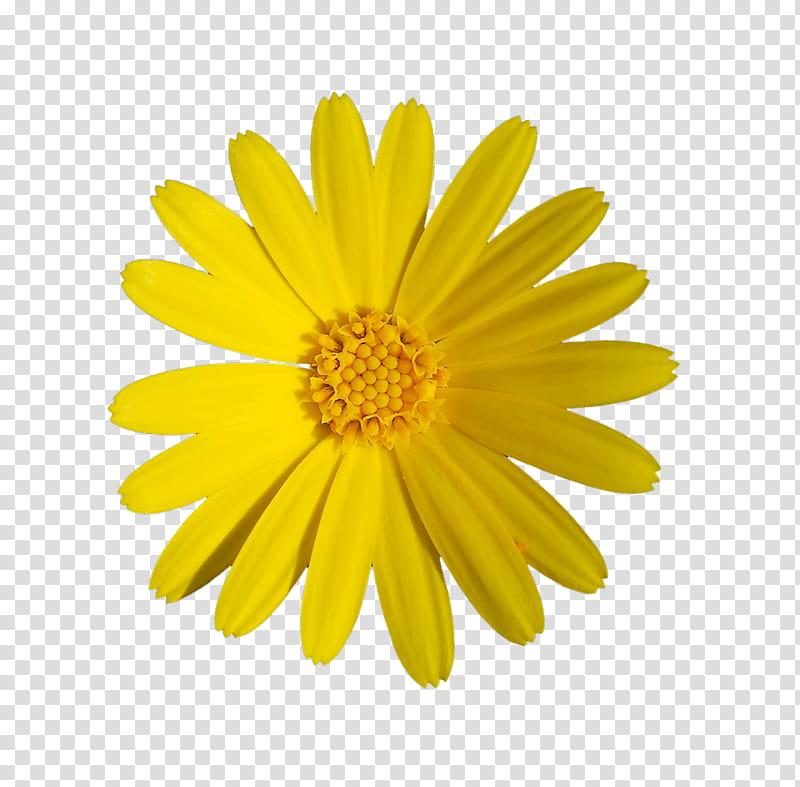 Daisies clipart flowering bush. Yellow flowers daisy flower
