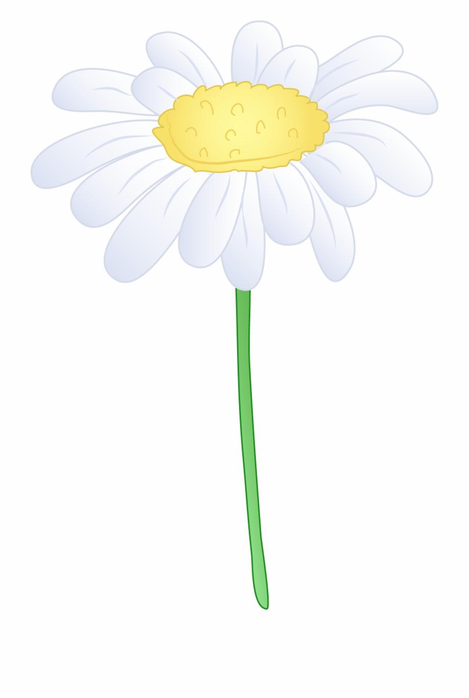 Daisies clipart flowering plant. Single white daisy flower