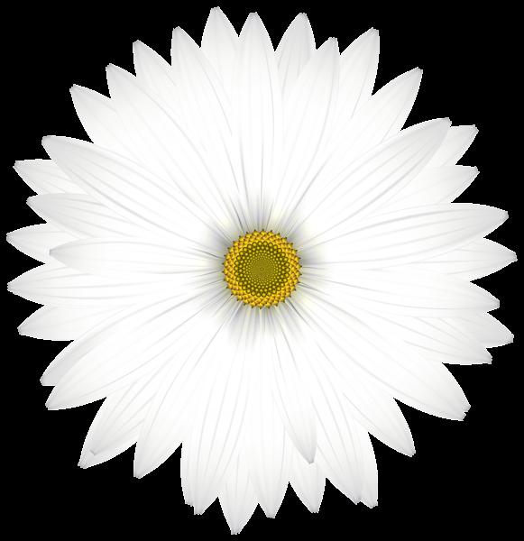 daisy clipart dais