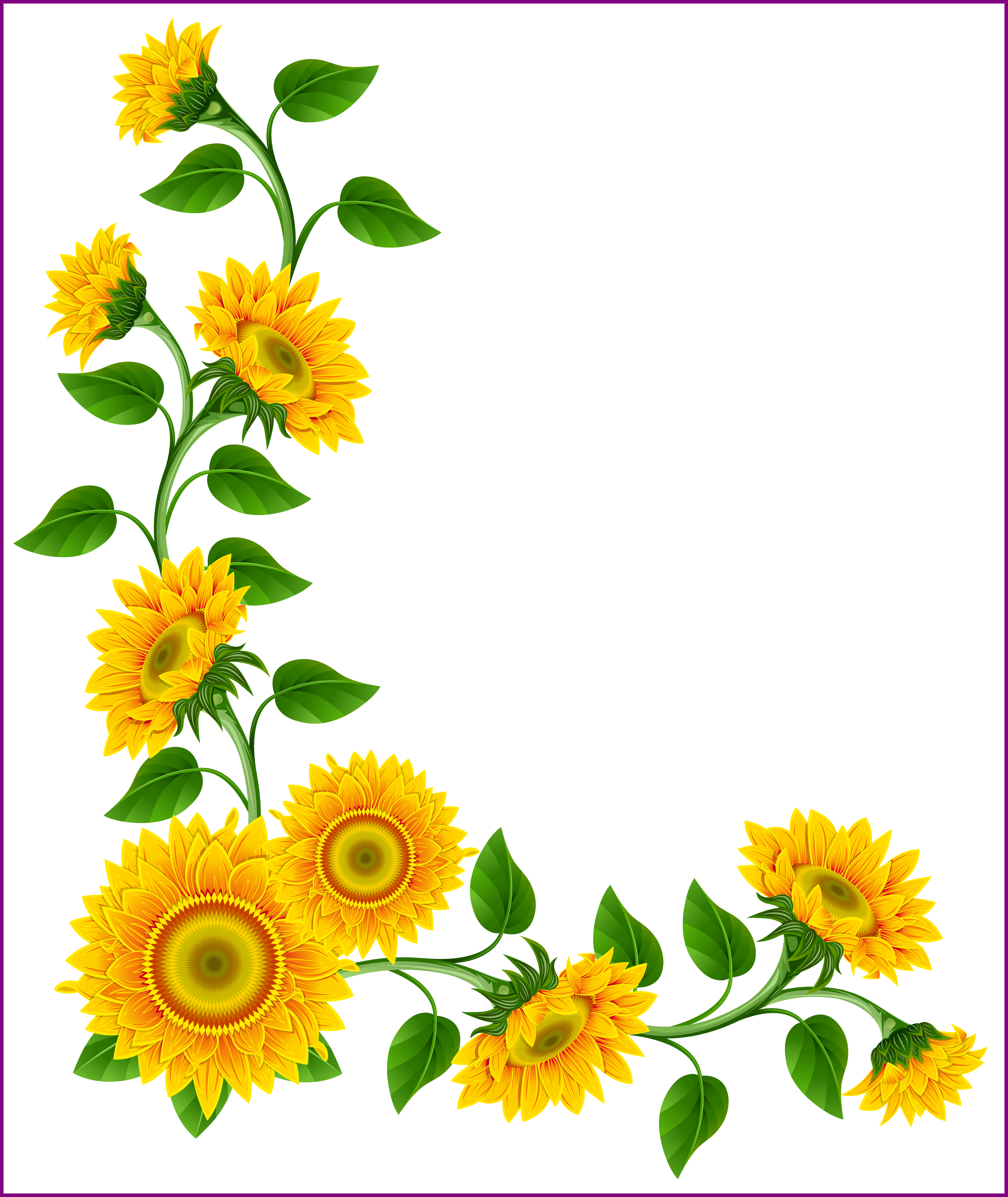 Appealing frames border graphics. Daisies clipart frame