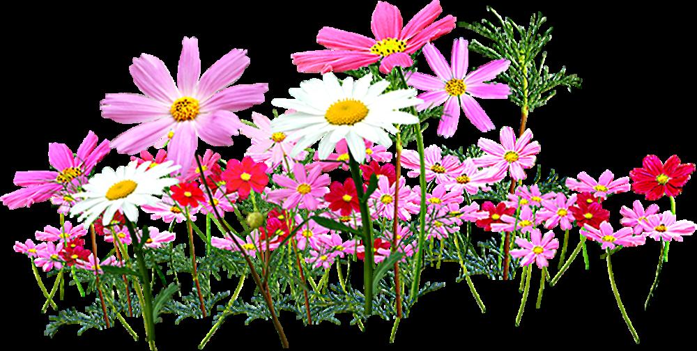 Flower garden cut flowers. Daisy clipart wildflower