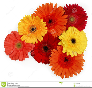 Daisies clipart gerber daisy. Free images at clker