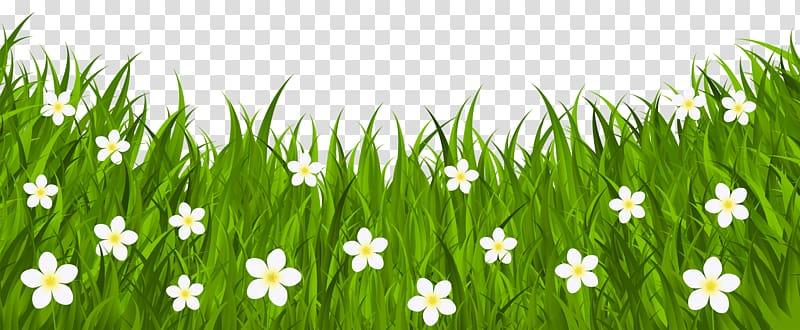 White flower field illustration. Daisy clipart wheat grass