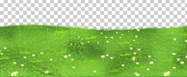 Daisies clipart high grass. Lawn grasses png blog