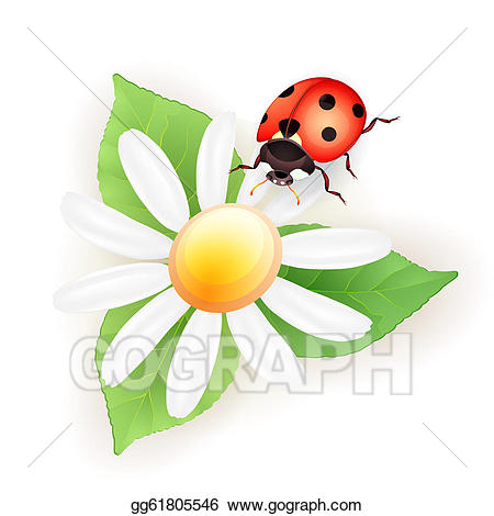 Ladybug clipart daisy. Vector illustration lady bug