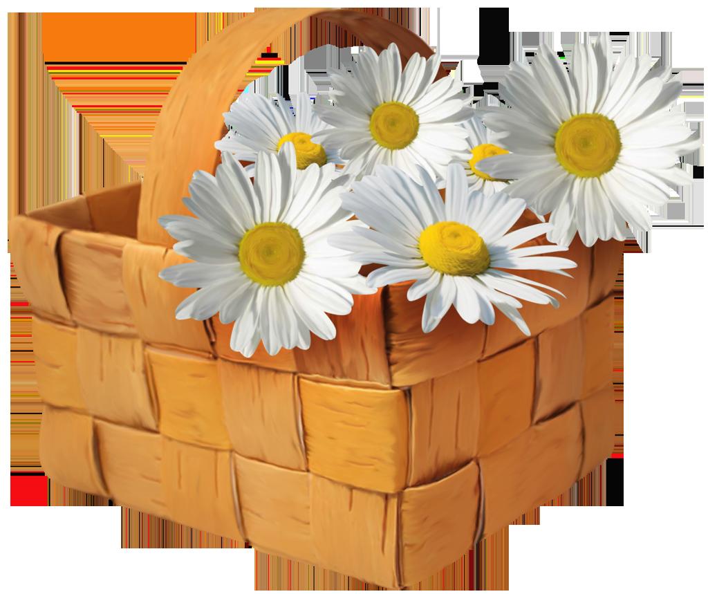 Basket frames illustrations hd. Daisy clipart large flower
