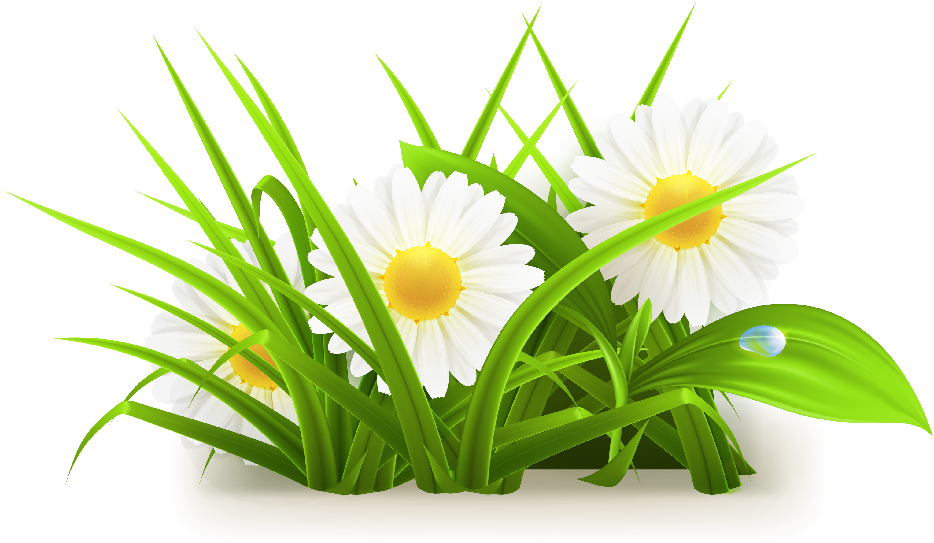 Grass vector png. Common daisy flowers transprent