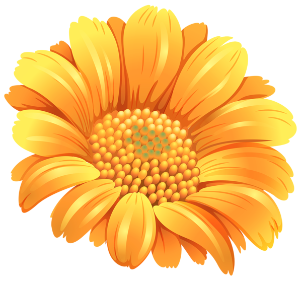 Gallery free pictures . Daisies clipart orange