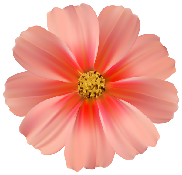 Daisies clipart orange. Daisy png image gallery