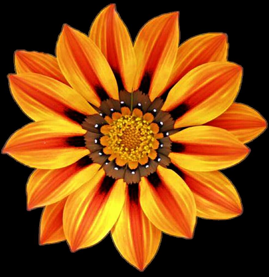 Daisies clipart orange. African daisy by jeanicebartzen