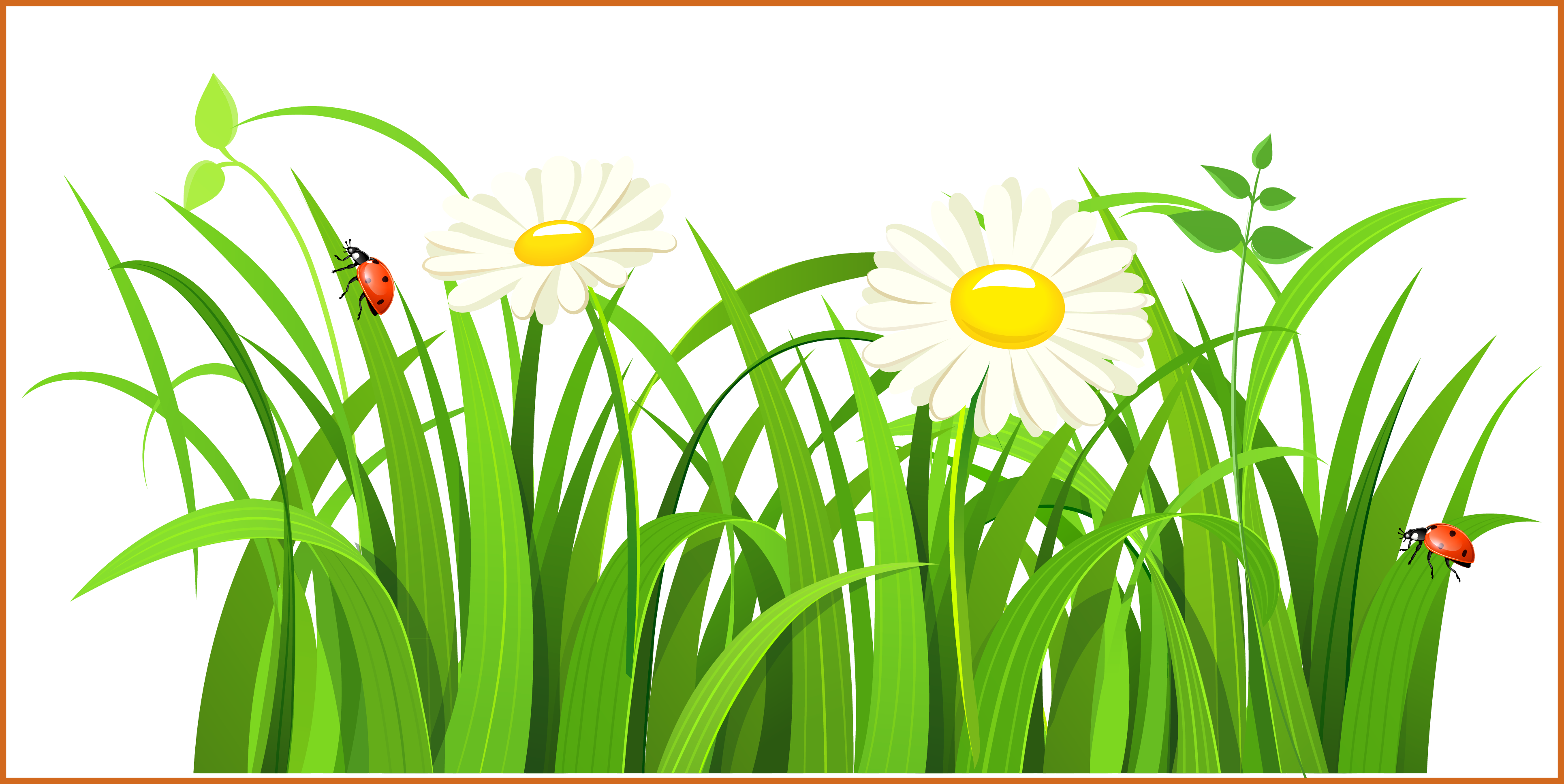 Daisy clipart patch grass. Appealing png button and