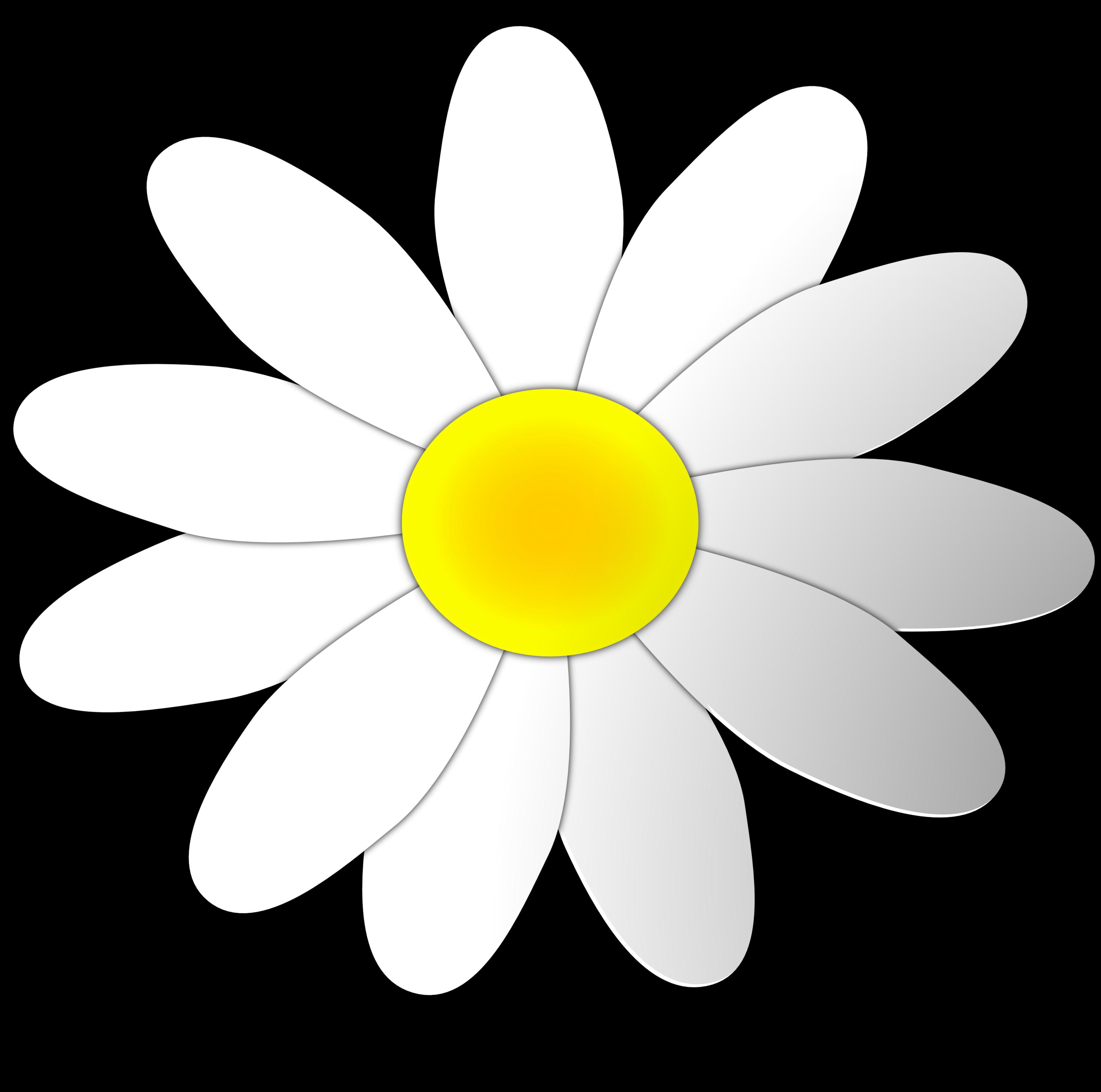 Coloured flower frames illustrations. Daisy clipart shasta daisy