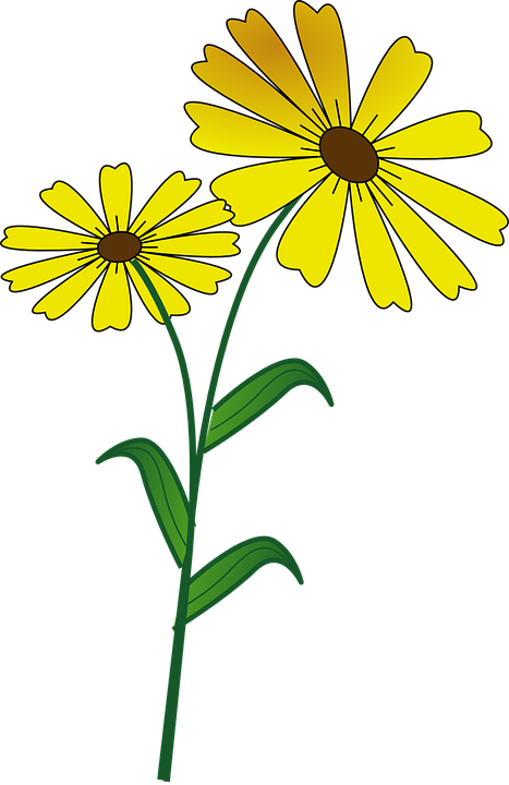daisies clipart plant insect