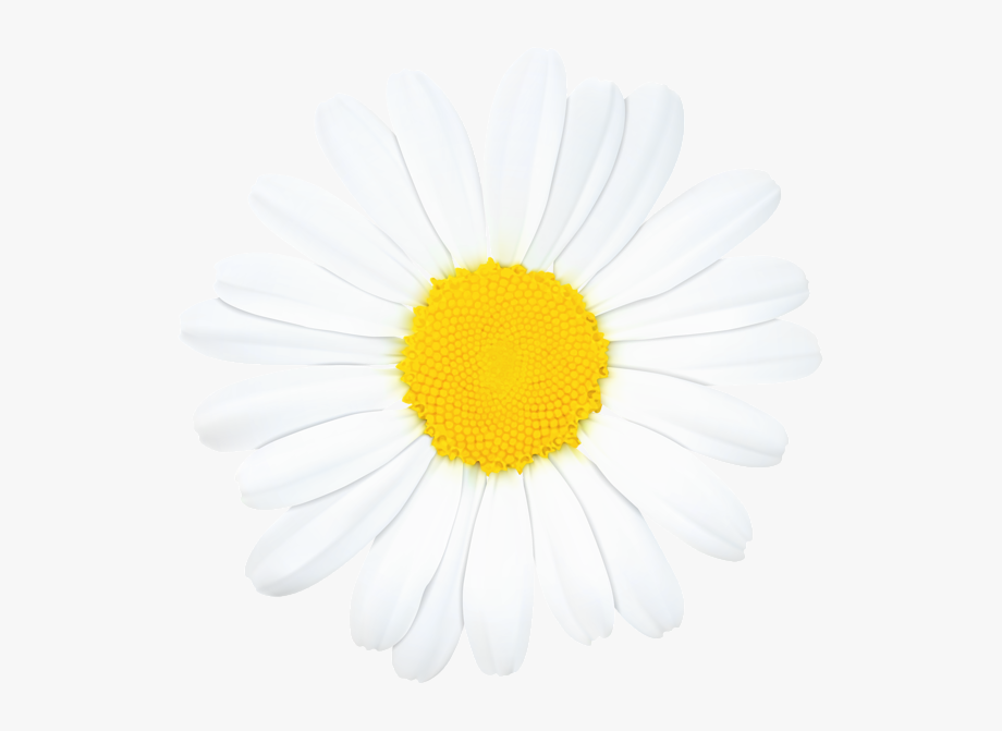 Daisy clipart daisie. Art images clip pictures