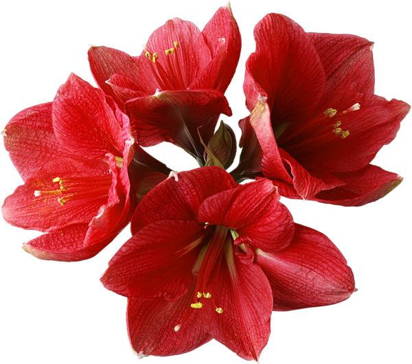 Gallery flowers . Real flower png
