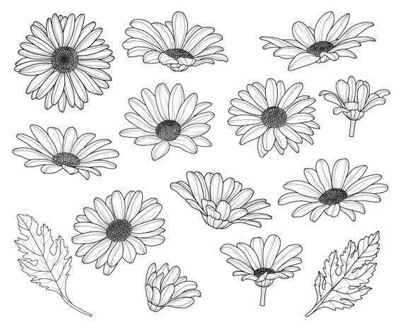 Flowers silhouette graphics illustration. Daisy clipart svg