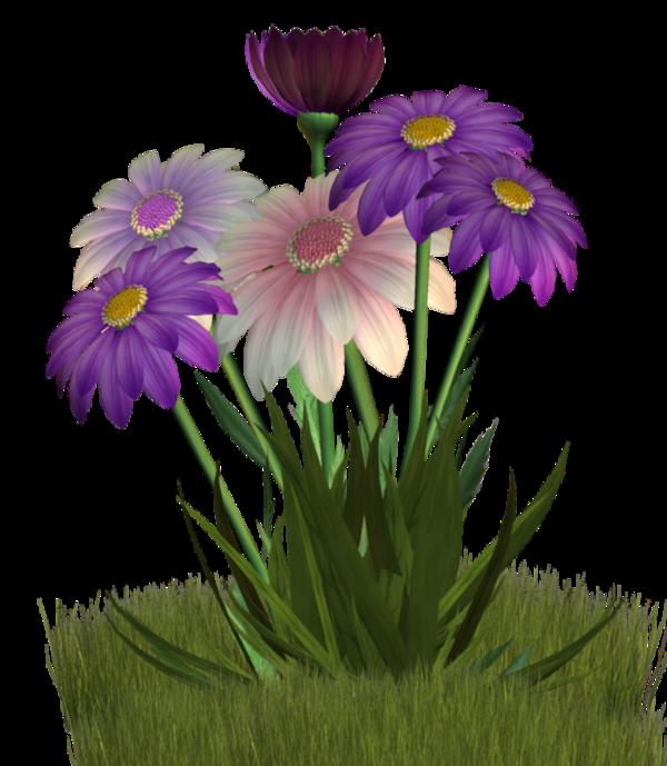 Daisies clipart spring season. Flores frames illustrations hd