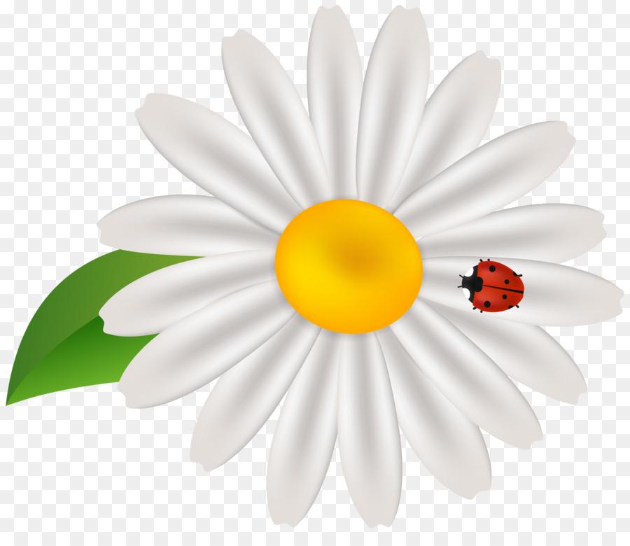 Daisy clipart springtime flower. Common clip art spring