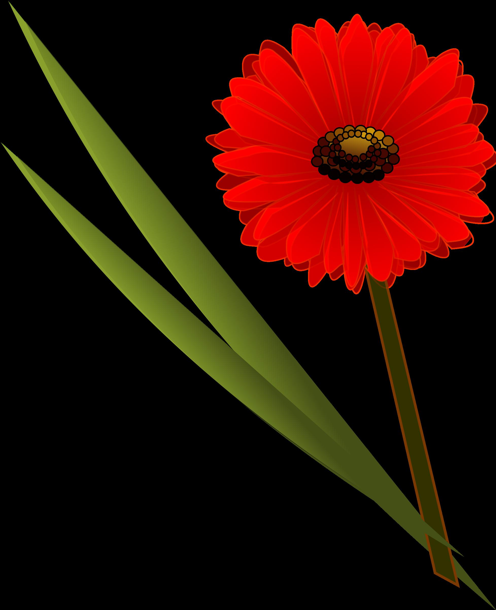 Flowers big image png. Mayflower clipart gerbera flower