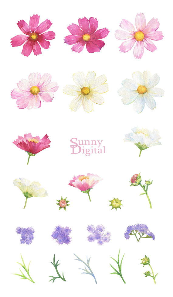 Daisies clipart summer. Daisy handpainted watercolor floral