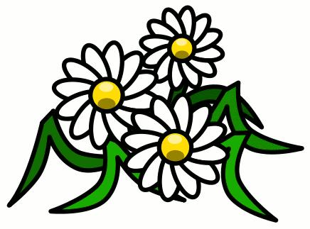 Free gerbera daisy download. Daisies clipart summer