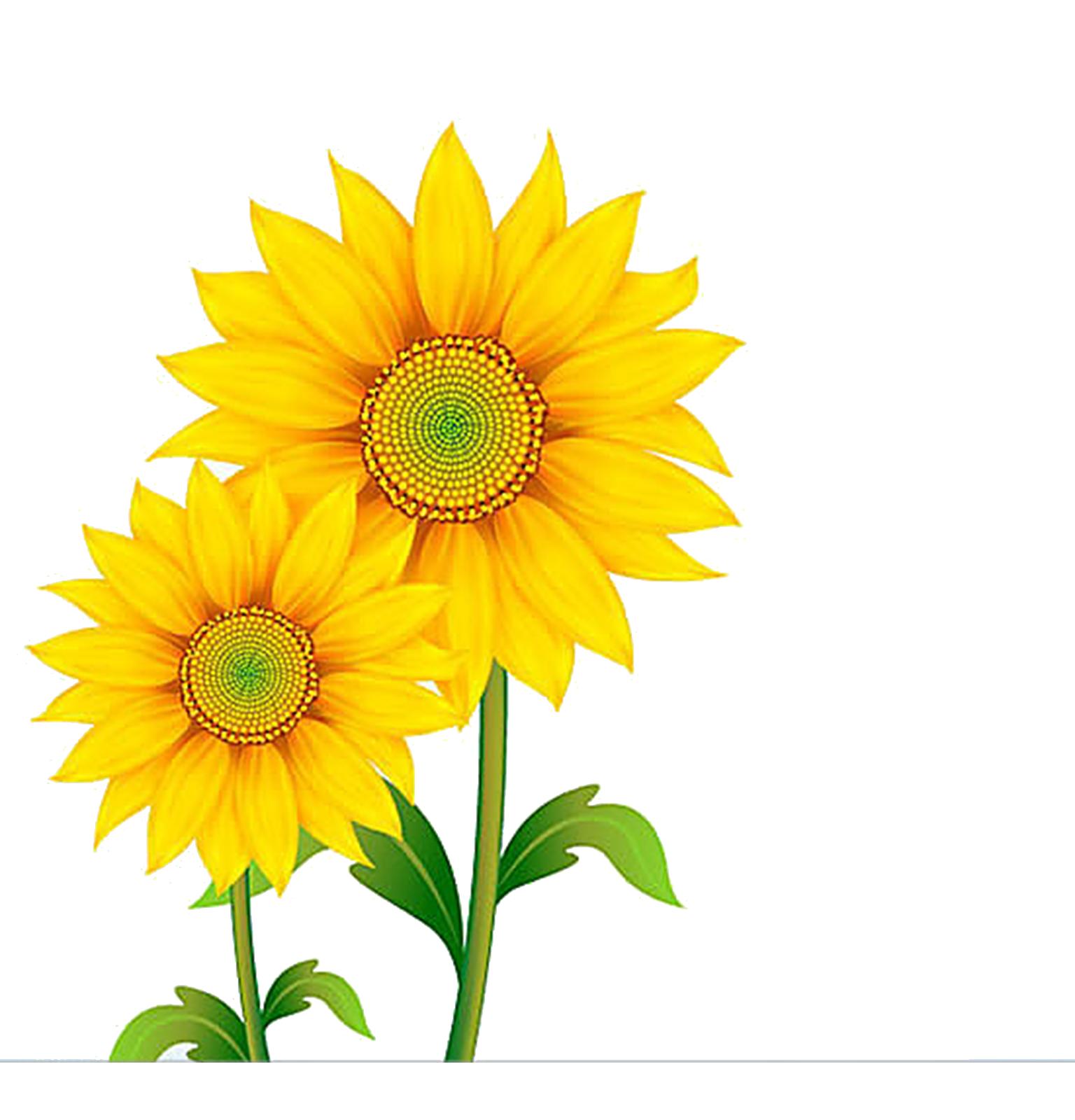 Daisy clipart sunflower, Daisy sunflower Transparent FREE ...