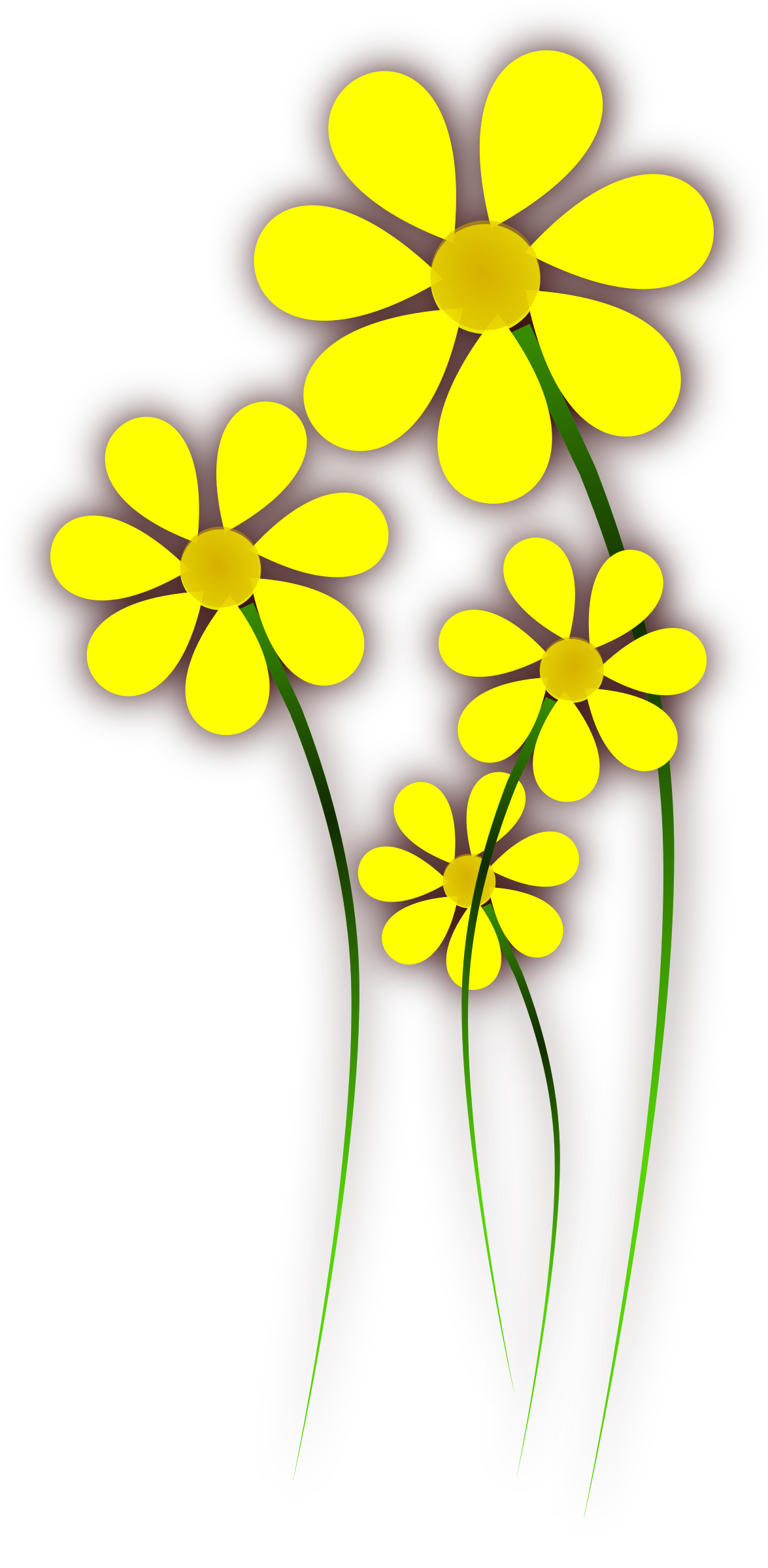 Daisies big image png. Daisy clipart daisie