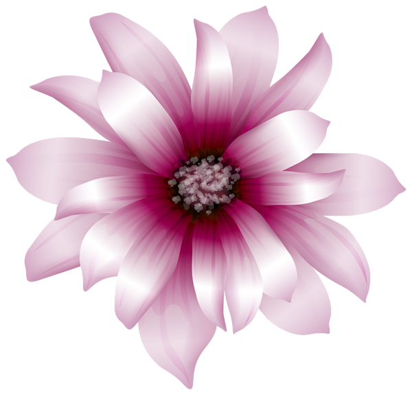 Daisies clipart transparent background. Large pink flower png