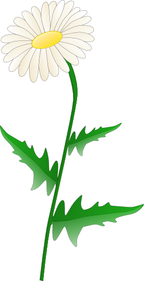 Free daisy cliparts download. Daisies clipart transparent background