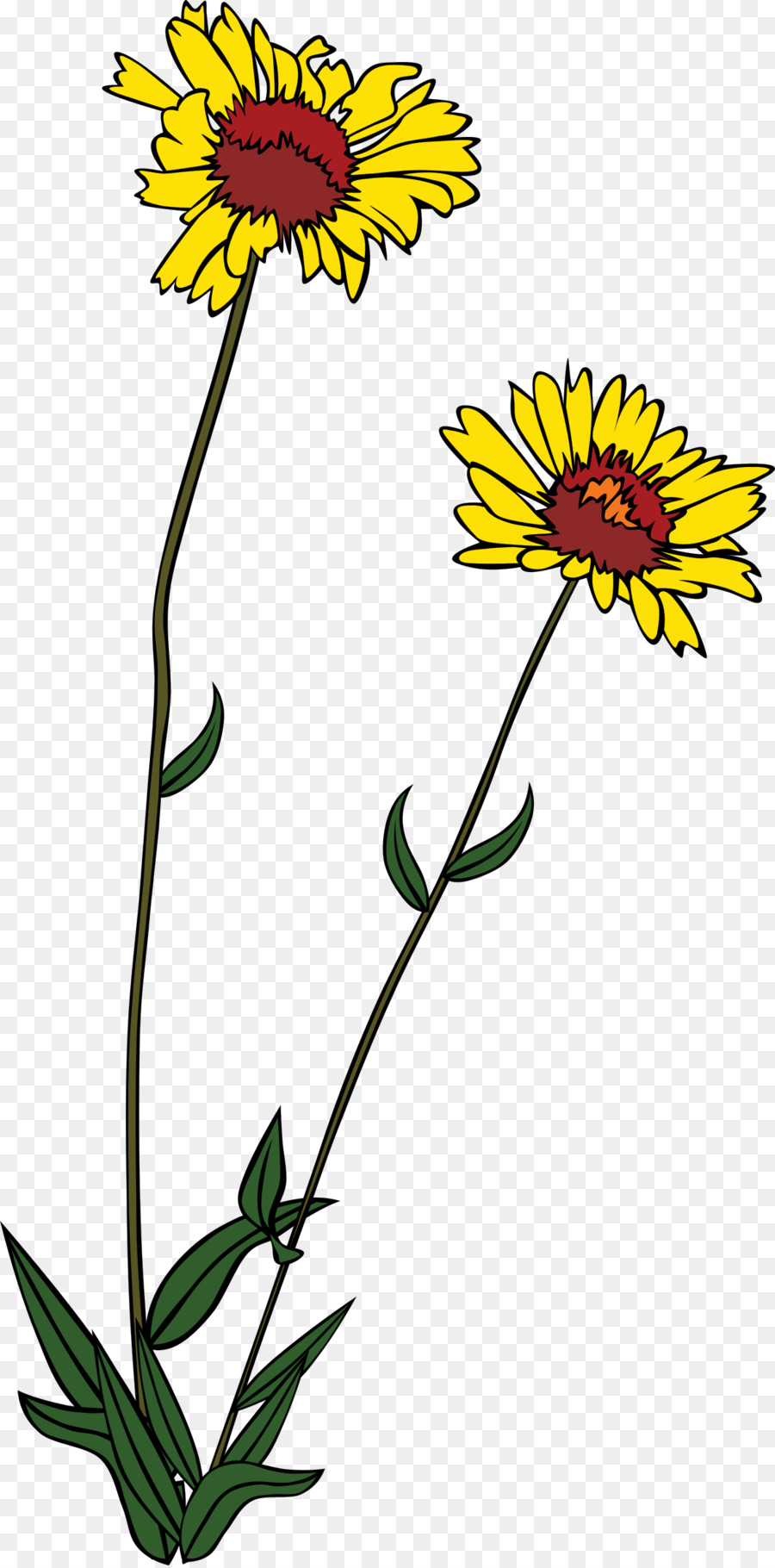 Daisy clipart wildflower. Black and white flower